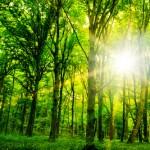 Environmental Consultancy